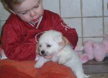 Photo of child with Bichon puppy